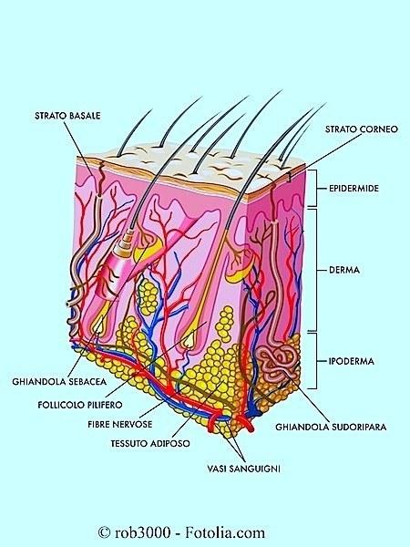 derma-epidermide