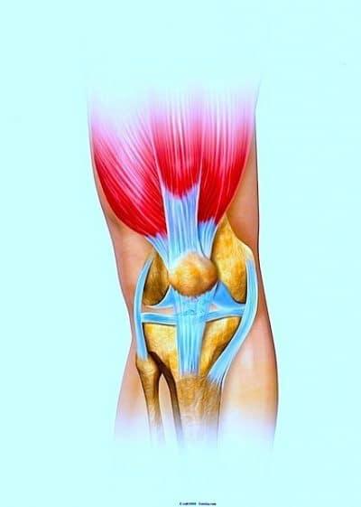 rodilla, anatomía