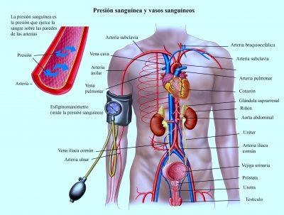 presión alta, hipertensión