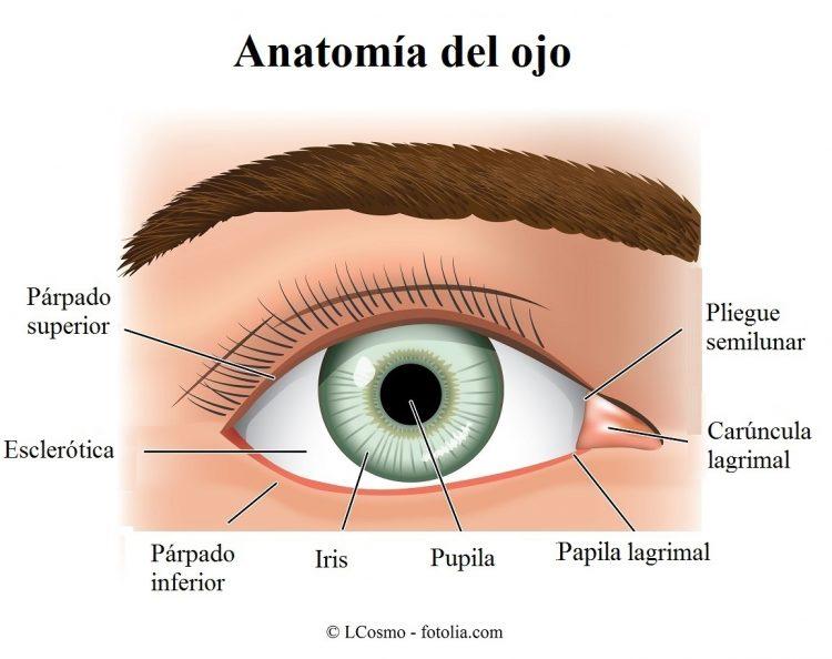 ojo, carúncula, lagrimal